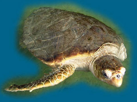 turtlehospital_pic