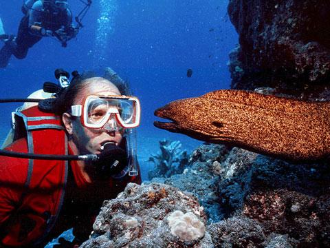 Florida Keys Diving